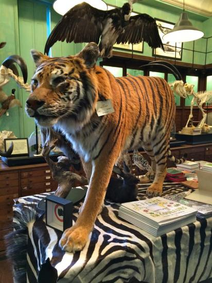 Deyrolle - taxidermiste - Paris