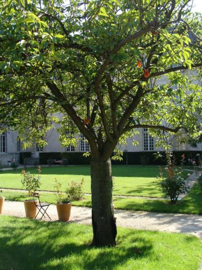Paris 3e - jardin secret 1