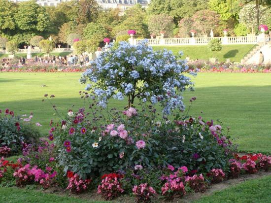 Paris - Jardin du Luxembourg - fleurs