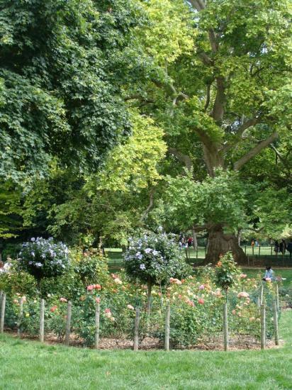Paris - Parc Monceau 8